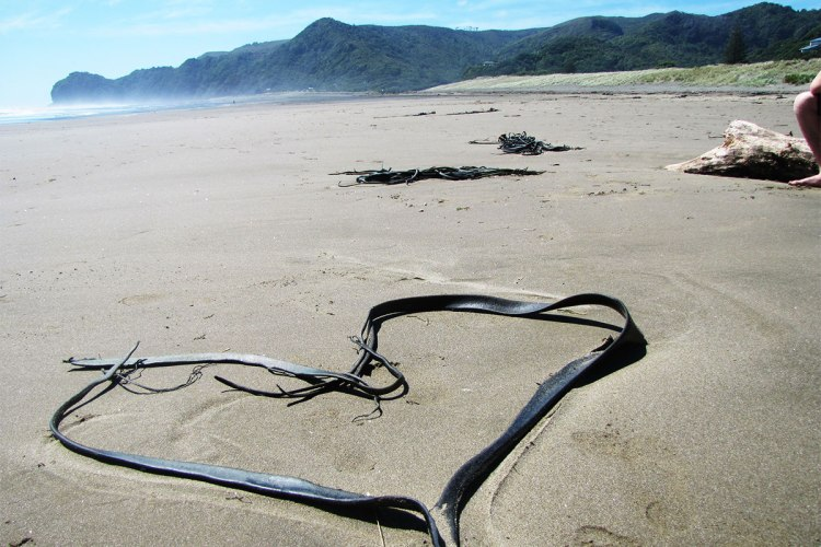 seaweed-heart-on-piha-beach