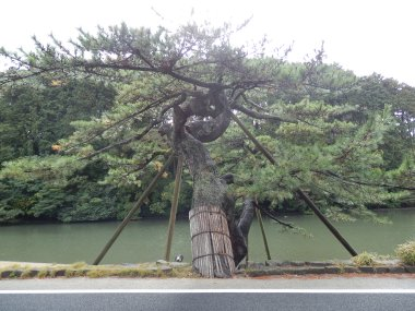 Tree support