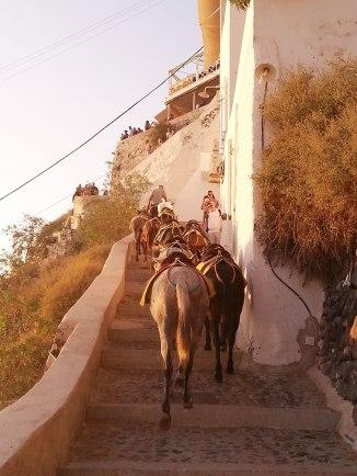 donkeys-in-santorini