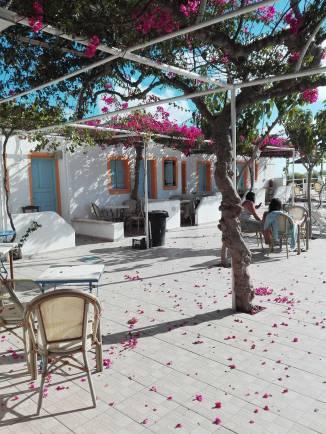 fushia-petals-brighten-the-poolside
