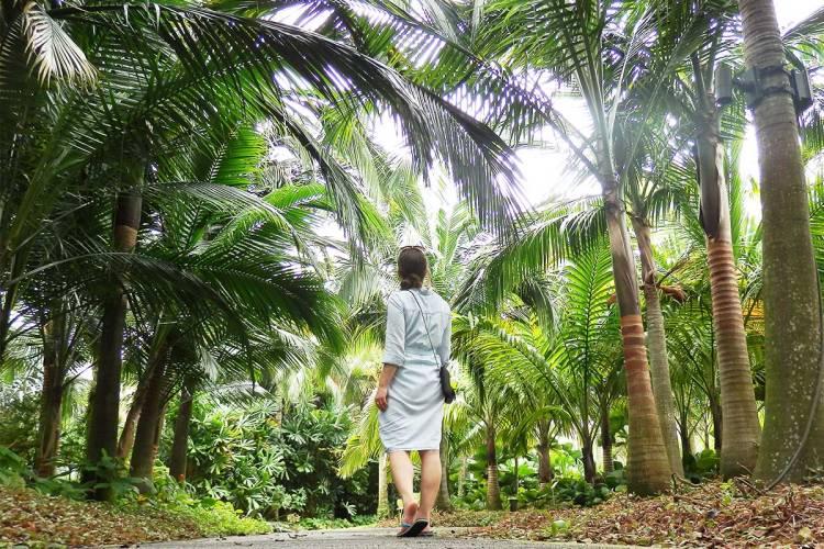 palm-gardens