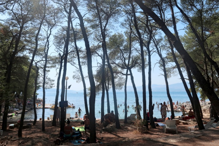 locals-enjoy-secluded-split-swim-spot-through-tall-trees