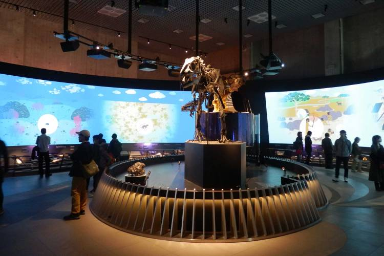 tokyo-science-and-nature-museum
