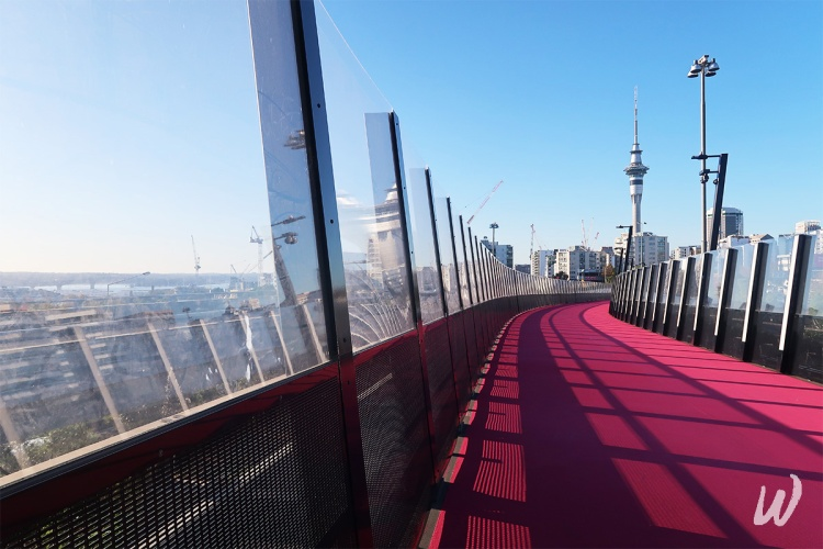 aucklands-pink-cyclepath-overlooking-skytower