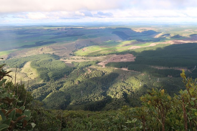 Farmland and forest views from Mt Tauhara summit