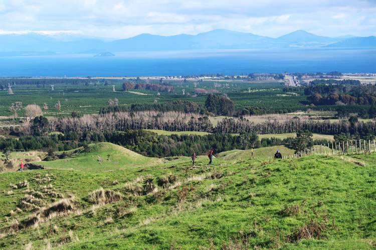 Grassy hills and farmland with mountains across Lake Taupo