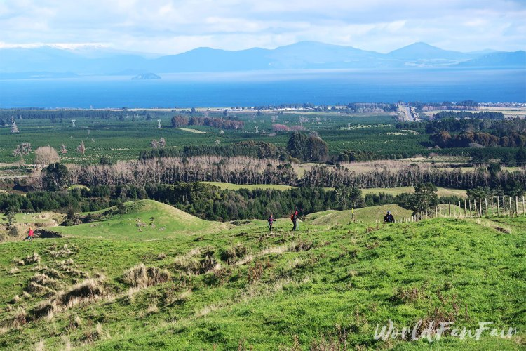 Grassy hills and fields with Lake Taupo in the distance